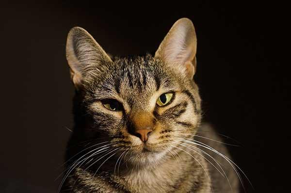 cat-1041324_1280-small
